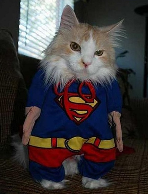 Superhero Cat Costume